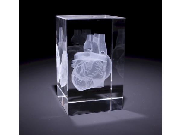 Anatomie Glasblok Hart