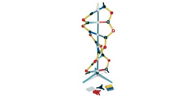 Orbit Klein DNA