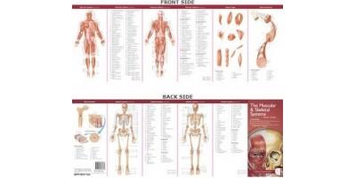 Skelet en Spierstelsel Studiegids