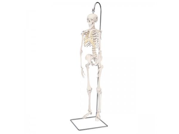 Skeletten: geavanceerd 80cm skelet, hangend