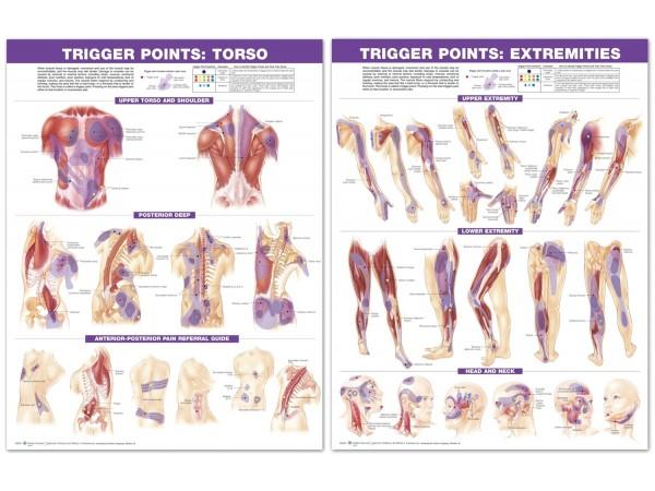 Triggerpoint Posterset, Torso en Ledematen