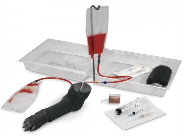 Intraveneuze Injectie Poot Hond