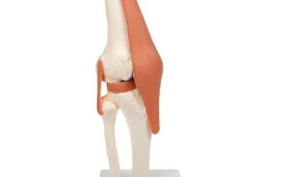 Kniegewricht