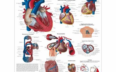 Hart & Bloedsomloop