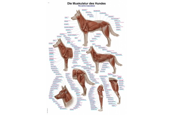 Posters Hond