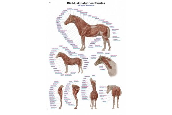 Posters Paard